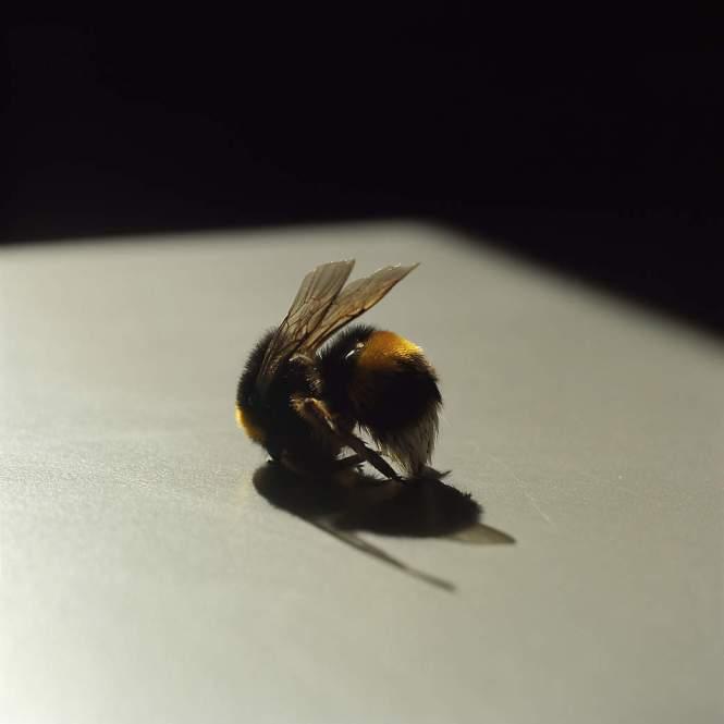 Bee_LGoldblatt